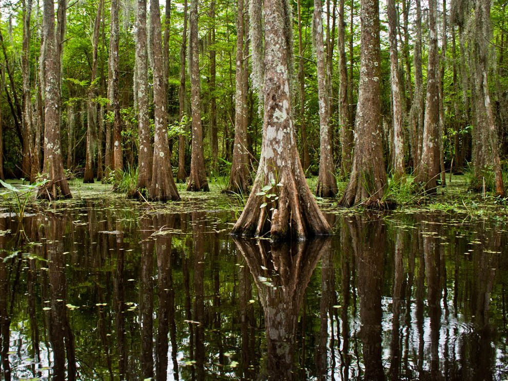 bayou - National Geogr...