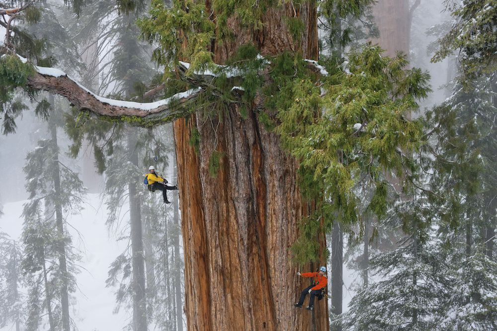 Sequoia National Park Created on Us History Exploration