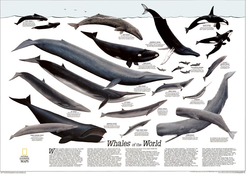 1976 Whales Of The World Poster