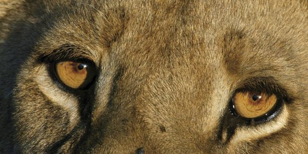 Individuals Matter Among Africa's Wild Animals