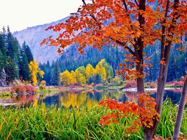 Fall Foliage, Washington