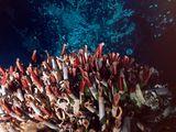 Deep-Sea Ecosystems: Extreme Living