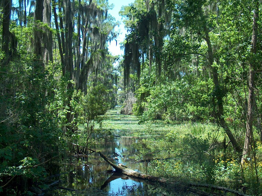 swamp | National Geographic Society