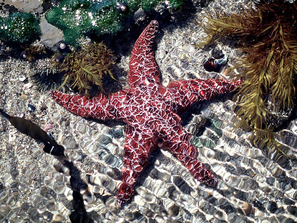 картинки морские звезды дельфины изготовлении