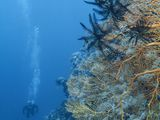 Protecting Marine Ecosystems