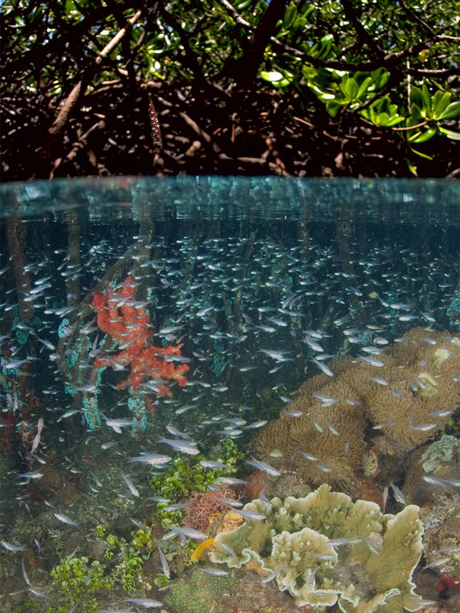 Beneath the Mangroves