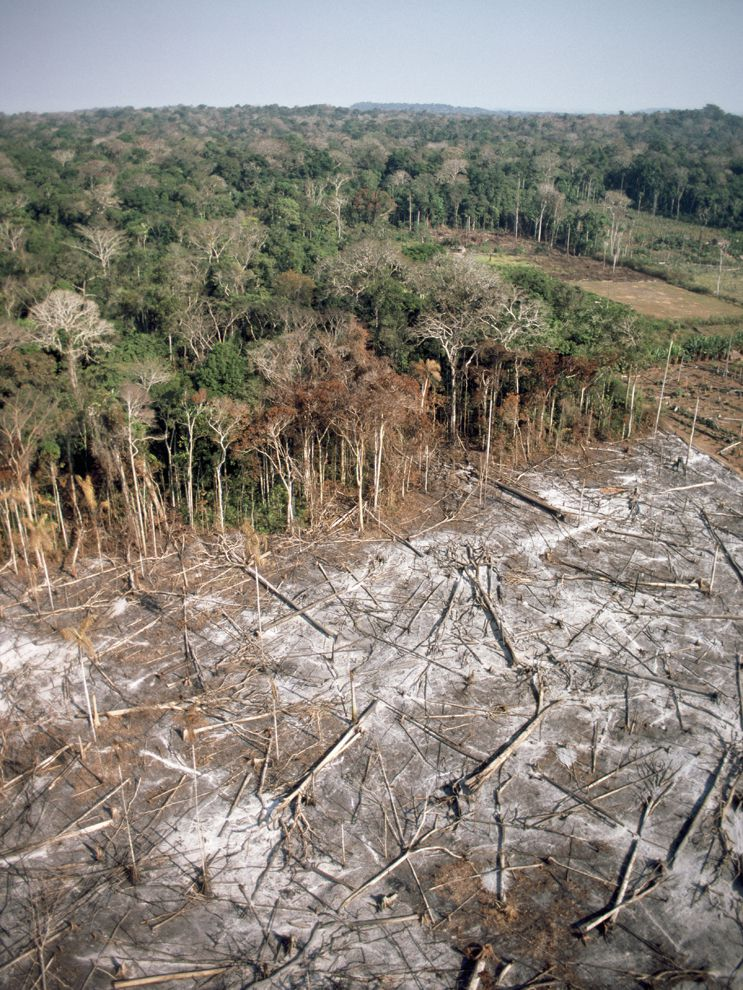 Clear-Cutting in Brazil | National Geographic Society