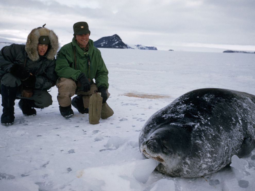 blubber | National Geographic Society