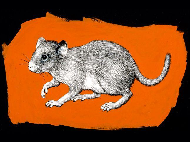Antarctic Marsupial
