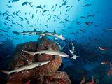 Case Study: Cocos Island National Park
