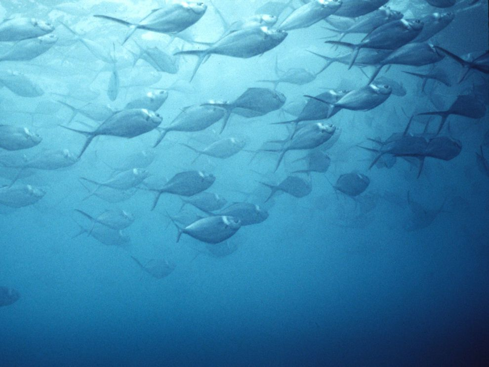 Habitat pdf marine magazine