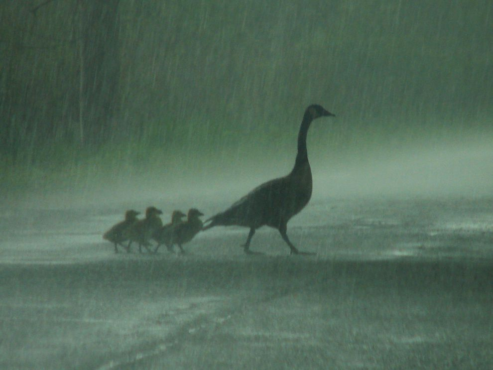 When It Rains It Swans >> Rain National Geographic Society