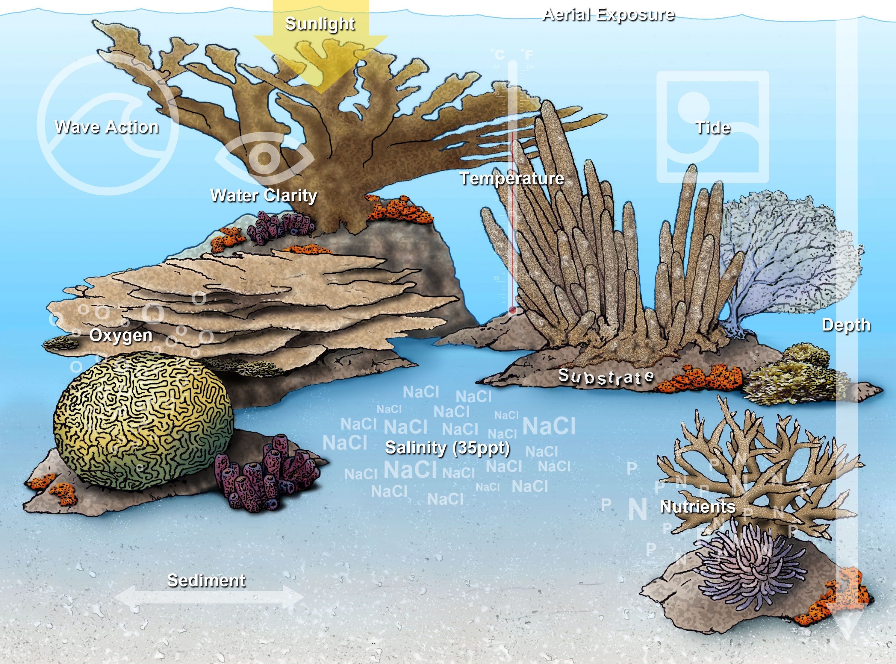 Coral Reef Food Web National Geographic Society