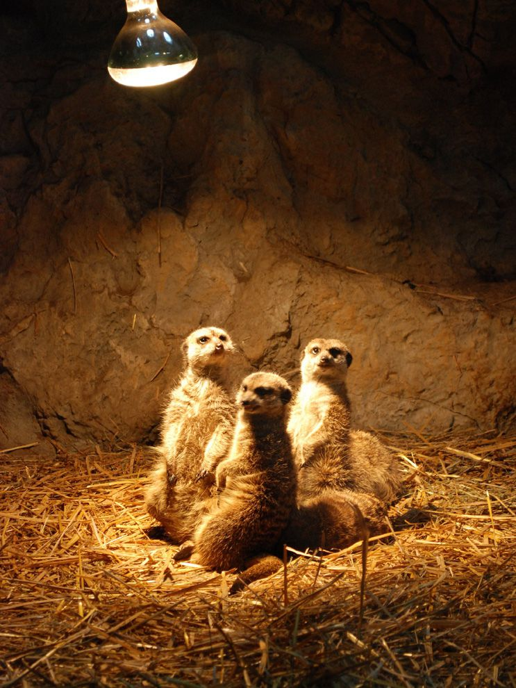 Bringing Meerkats To Light