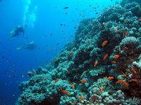 Photo: Healthy coral reefs in the Atlantic Ocean.