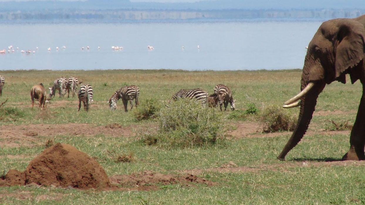 african savanna community web | national geographic society