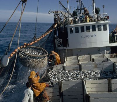 Photo: Men harvest fish on a boat.