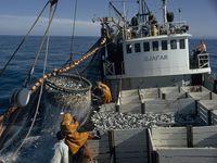 Photo: Men harvest fish on a boat.