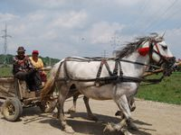 Photo: Farmers traveling  by horse