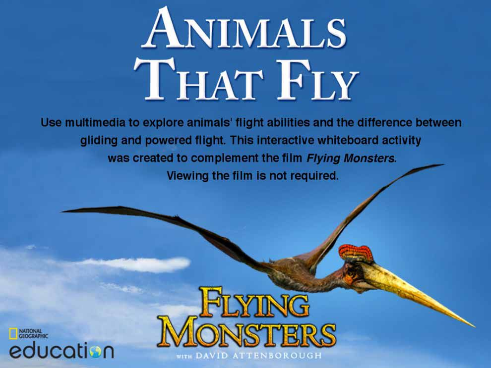 Animals That Fly National Geographic Society