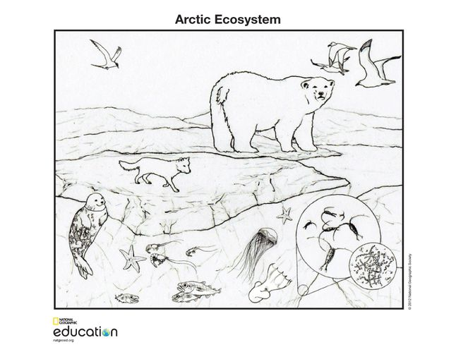 invasive species coloring pages - photo#7