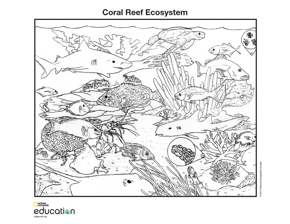 latest updates for coloring pages coral reef ecosystem