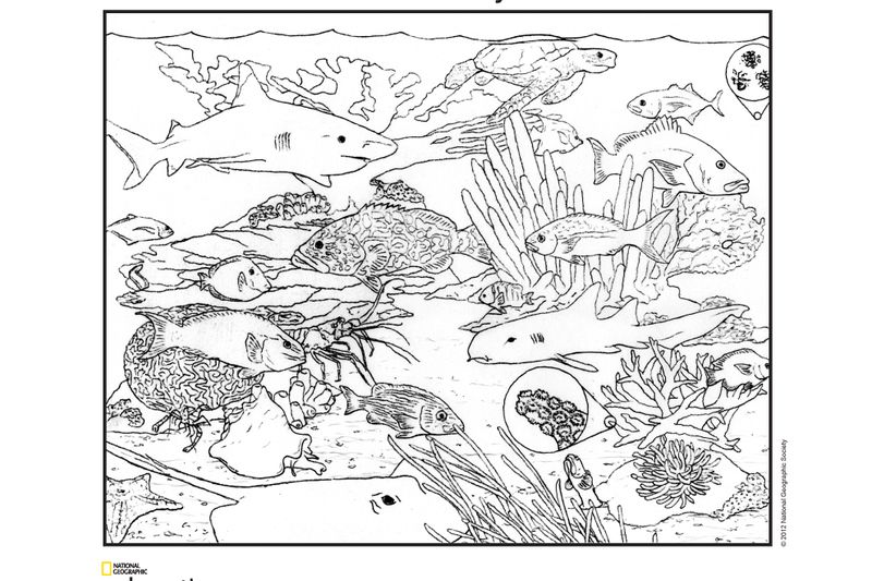 coloring pages - National Geographic Society