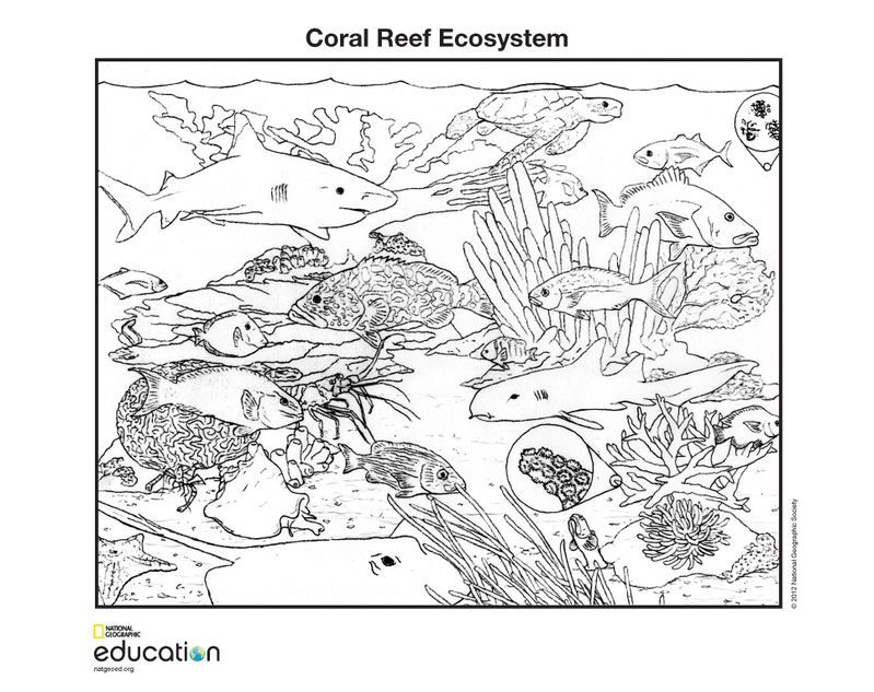 Coloring Pages | National Geographic Society
