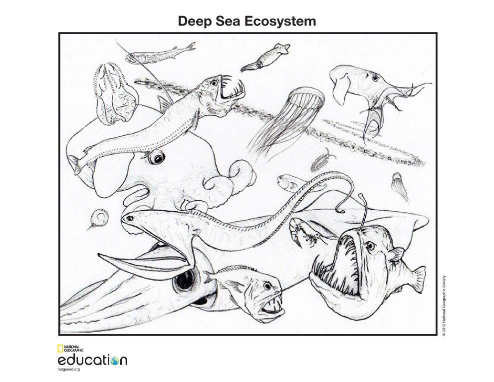 Deep Sea Ecosystem National Geographic Society