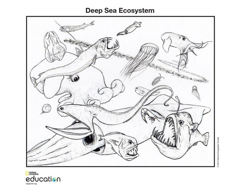 Ecology coloring pages | Coloring pages to download and print | 633x799