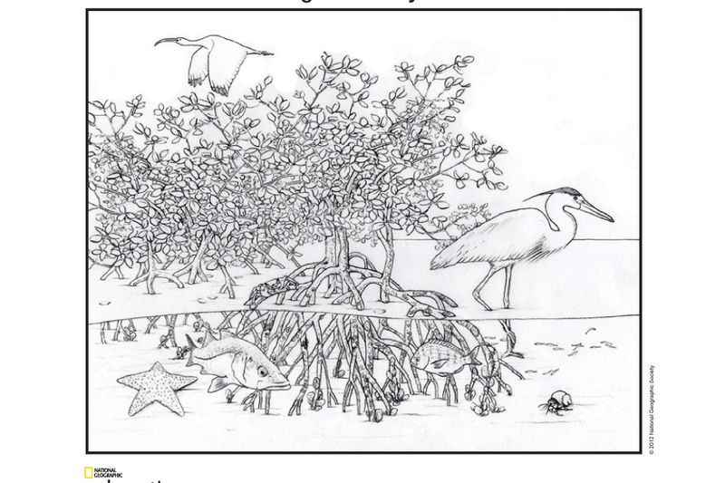 invasive species coloring pages - photo#4