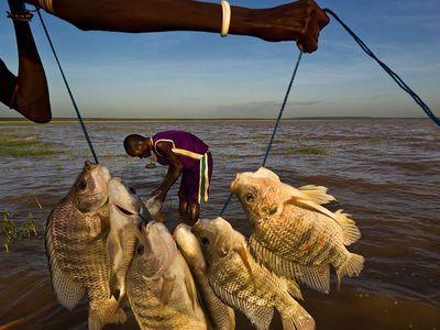 Photo: Catch of fresh fish.