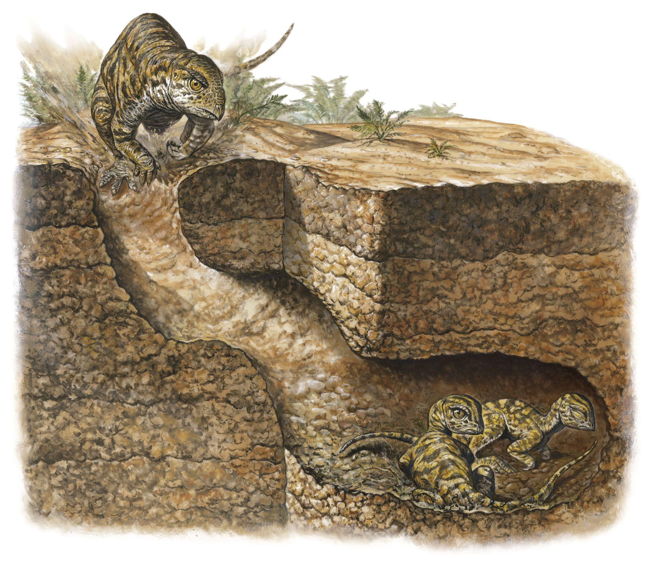 dinosaur burrow national geographic society