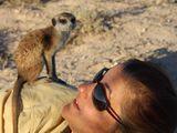 Animal Behavior Scientist: Christine Drea