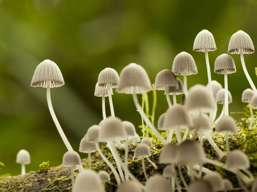 mushrooms national geographic society