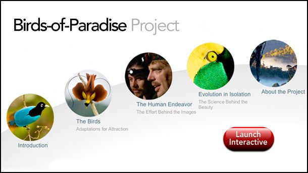 This launches the Birds of Paradise interactive in a new window.
