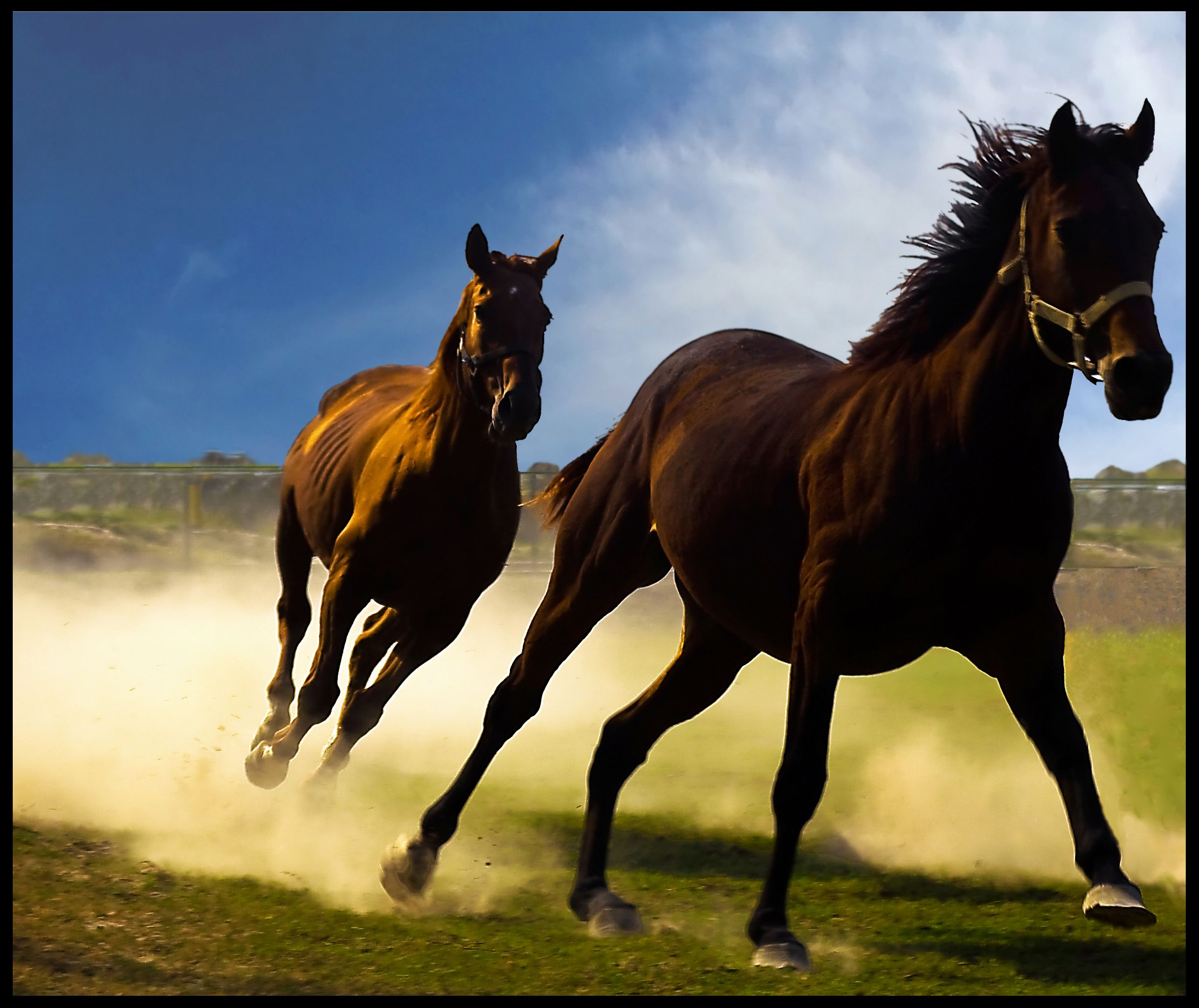 Horses Running National Geographic Society