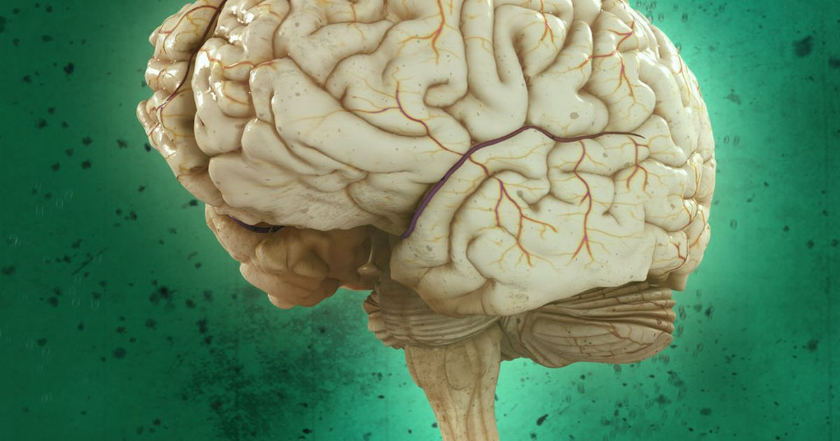Brain Games | National Geographic Society