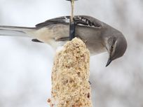 Photo of a bird at a feeder.