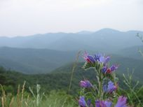 Photo of flowers on a mountaintop.