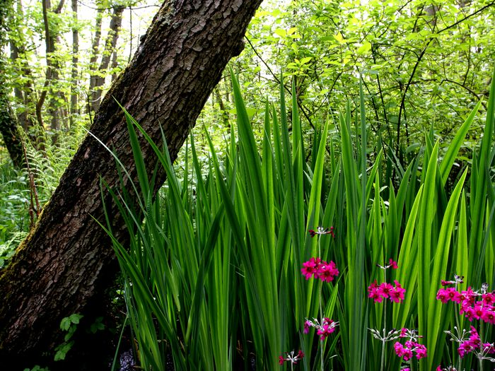 Picture of pink flowers against green stalks, all under a tree trunk.