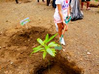 Photograph of people planting trees.