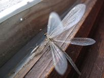 Photograph of insects on a windowsill.