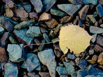 Photograph of rocks and a leaf.