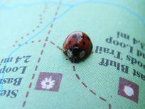 Photograph of a ladybug on a map.