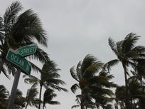 Picture of palm trees in the wind.