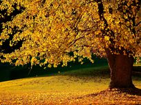 Picture of fall foliage.