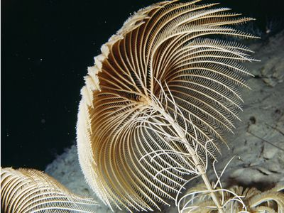 Photo. Deep sea animal.