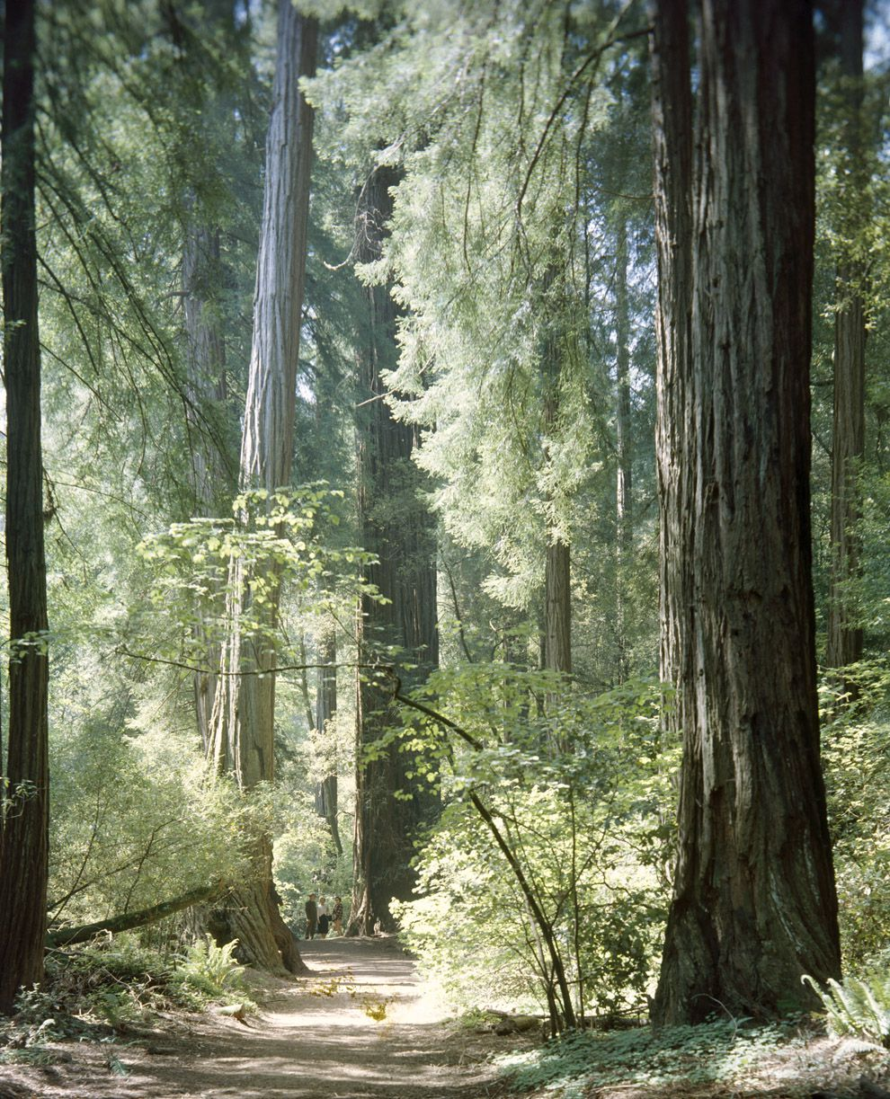 Muir Woods National Geographic Society