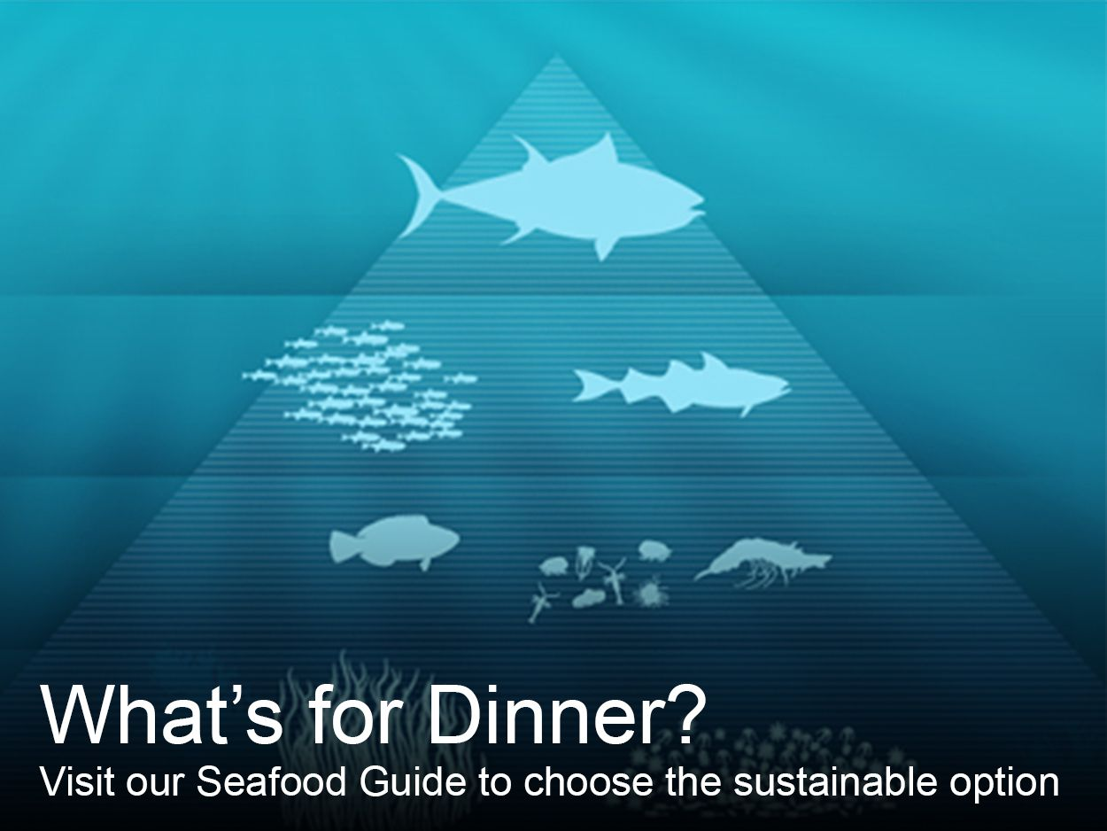 Ocean Initiative Seafood Decision